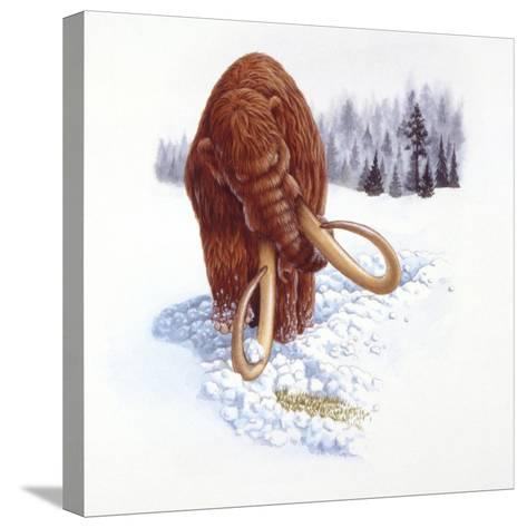 Mammoth Searching for Food in Snow--Stretched Canvas Print