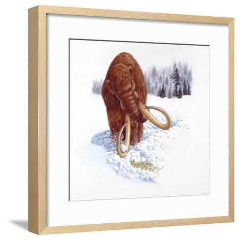 Mammoth Searching for Food in Snow--Framed Art Print