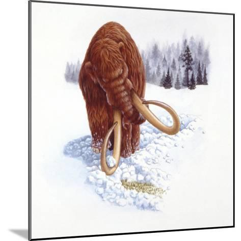 Mammoth Searching for Food in Snow--Mounted Giclee Print