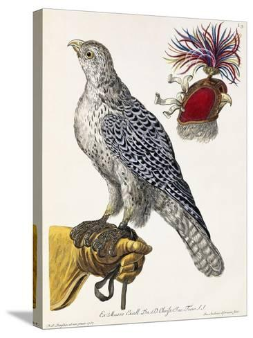 Falconry, Plate 3, from 'Deliciae Naturae Selectae', 1771-Georg Wolfgang Knorr-Stretched Canvas Print