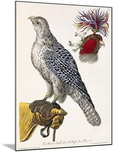 Falconry, Plate 3, from 'Deliciae Naturae Selectae', 1771-Georg Wolfgang Knorr-Mounted Giclee Print