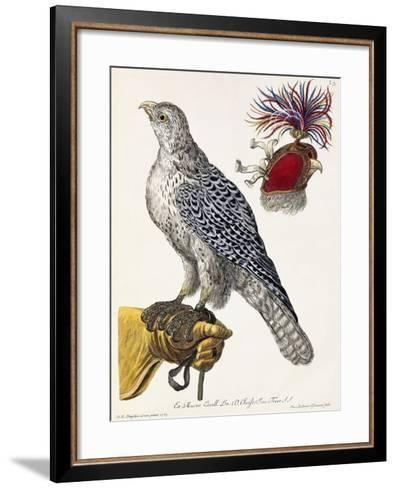 Falconry, Plate 3, from 'Deliciae Naturae Selectae', 1771-Georg Wolfgang Knorr-Framed Art Print