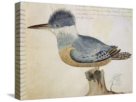 Bird, Close to the Jay of France, Near the Strait of Magellan--Stretched Canvas Print