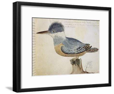 Bird, Close to the Jay of France, Near the Strait of Magellan--Framed Art Print