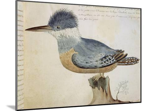 Bird, Close to the Jay of France, Near the Strait of Magellan--Mounted Giclee Print