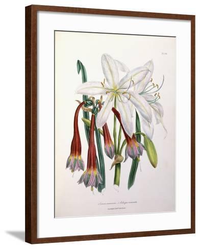 1. Crinum Arenarium and 2. Cobergia Incarnata, 1840-1844--Framed Art Print