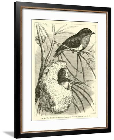 The Australian Flower-Pecker, or Swallow Dicaeum, and Nest--Framed Art Print