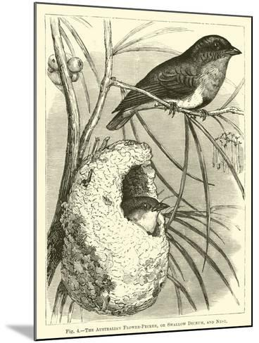 The Australian Flower-Pecker, or Swallow Dicaeum, and Nest--Mounted Giclee Print