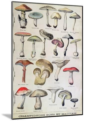 Botanical Plate Depicting 'Good and Bad Mushrooms', C.1900--Mounted Giclee Print
