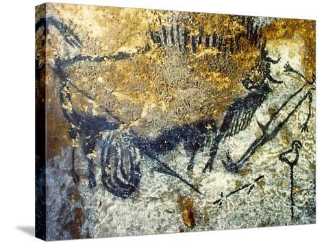 A Wounded Bison Attacking a Man, C.15,000-10,000 Bc--Stretched Canvas Print