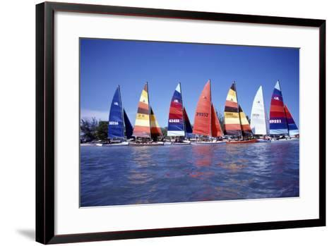 Hobie Cats Anchored and Lined Up Along the Shore, C.1990--Framed Art Print