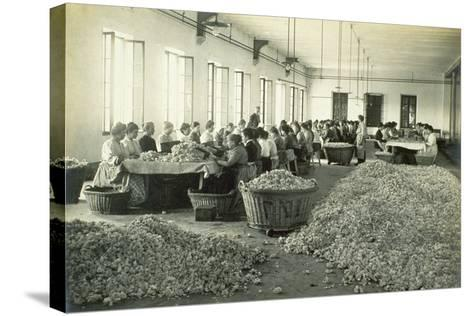 Sorting Roses, from 'Industrie Des Parfums a Grasse', C.1900--Stretched Canvas Print