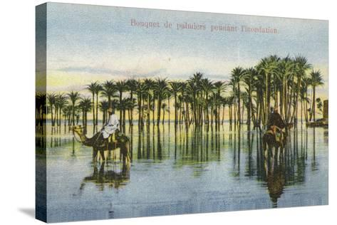 Submerged Palm Trees During the Nile Floods, Egypt--Stretched Canvas Print