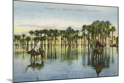 Submerged Palm Trees During the Nile Floods, Egypt--Mounted Photographic Print