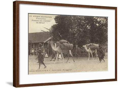 French West Africa - Transporting Peanuts in Senegal--Framed Art Print