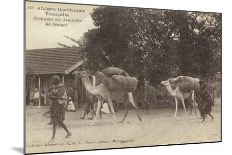 French West Africa - Transporting Peanuts in Senegal--Mounted Photographic Print