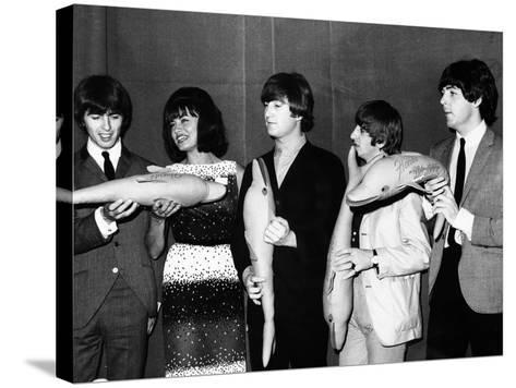 The Beatles Hold Souvenir Bottlenose Dolphins, February 1964--Stretched Canvas Print