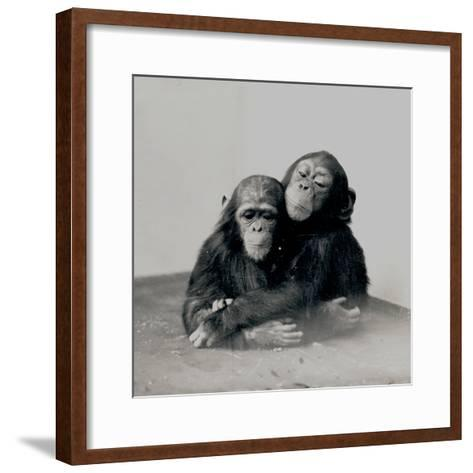 Johnnie and a Friend, Two of ZSL London Zoo's Chimpanzees, 1923-Frederick William Bond-Framed Art Print