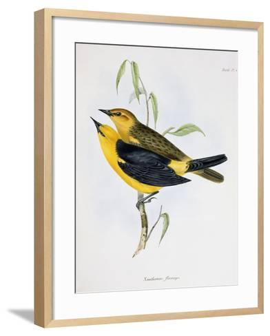 Pair of Xanthornus Flaviceps, Illustration from 'Zoology of the Voyage of H.M.S. Beagle, 1832-36'-Charles Darwin-Framed Art Print