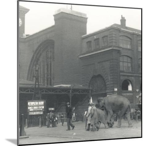 Elephants Walking from the Docks Passing Kings Cross Station on the Way to Zsl London Zoo-Frederick William Bond-Mounted Photographic Print