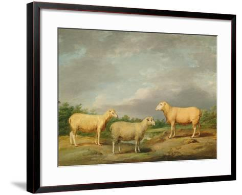 Ryelands Sheep, the King's Ram, the King's Ewe and Lord Somerville's Wether, C.1801-07-James Ward-Framed Art Print