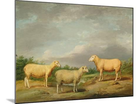 Ryelands Sheep, the King's Ram, the King's Ewe and Lord Somerville's Wether, C.1801-07-James Ward-Mounted Giclee Print