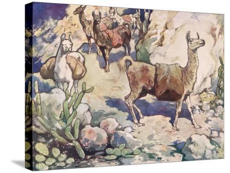 Alpacas on a Mountain Path-John Edwin Noble-Stretched Canvas Print