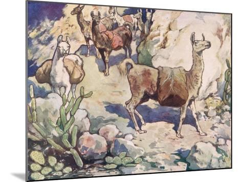Alpacas on a Mountain Path-John Edwin Noble-Mounted Giclee Print