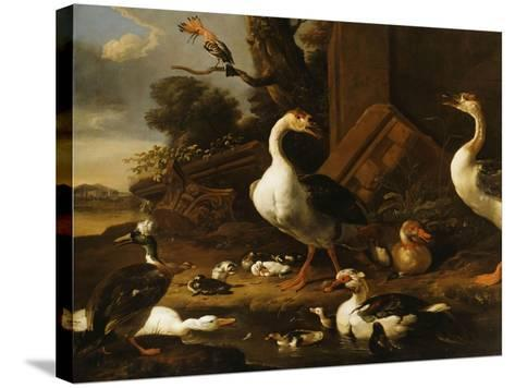 Chinese and Egyptian Geese and Other Birds in a Landscape with Ruins Nearby-Melchior de Hondecoeter-Stretched Canvas Print