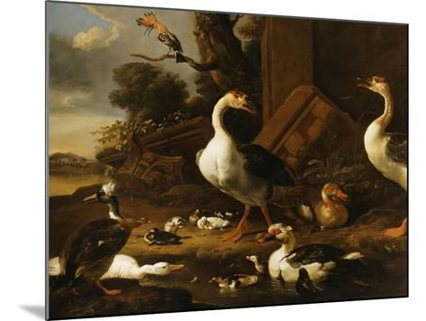 Chinese and Egyptian Geese and Other Birds in a Landscape with Ruins Nearby-Melchior de Hondecoeter-Mounted Giclee Print