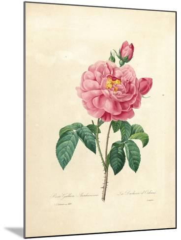 The Duchess of Orleans Rose-Pierre-Joseph Redout?-Mounted Giclee Print