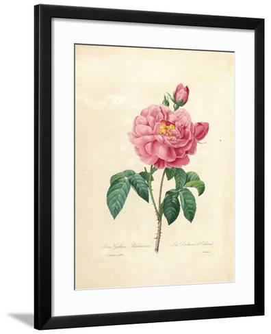 The Duchess of Orleans Rose-Pierre-Joseph Redout?-Framed Art Print