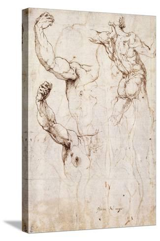 The Back of a Nude and Two Studies of a Raised Arm and Shoulder, Seen from the Front-Perino Del Vaga-Stretched Canvas Print