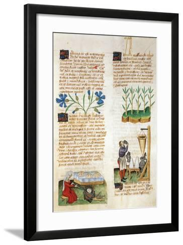 The Properties of Sugar Cane and the Baking of Sweet Breads--Framed Art Print