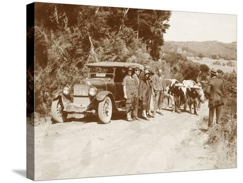 Travellers Posing Beside their Car with Two Oxen and a Cattle Driver--Stretched Canvas Print