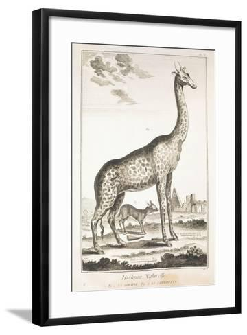 Plate Showing Giraffe and Musk Deer--Framed Art Print