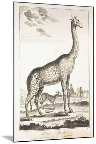 Plate Showing Giraffe and Musk Deer--Mounted Giclee Print