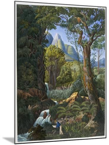 Morenia Poppigiana and Forest--Mounted Giclee Print
