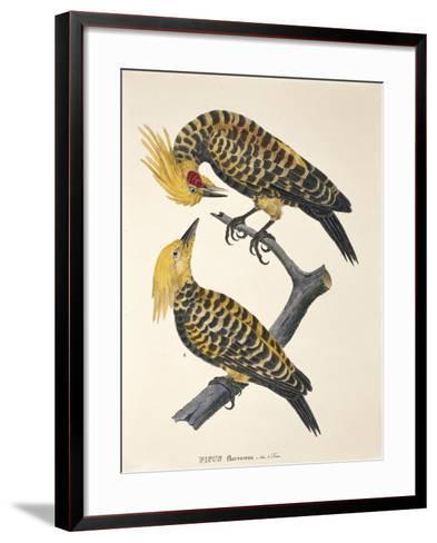 Picus Flavescens--Framed Art Print