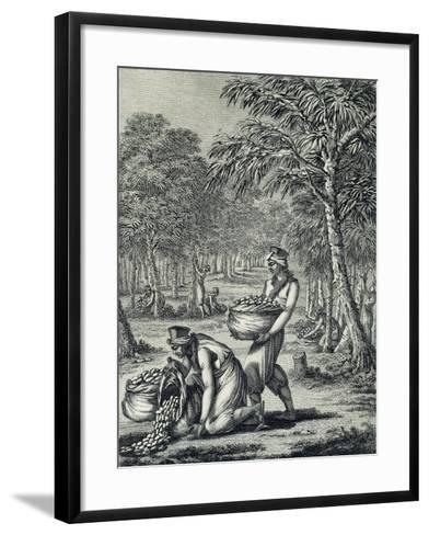 Rubber Harvesting--Framed Art Print