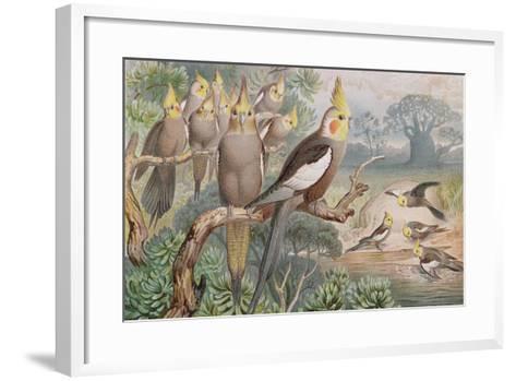 Kockatiel--Framed Art Print