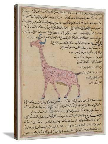 Ms E-7 Fol.180 a Giraffe--Stretched Canvas Print