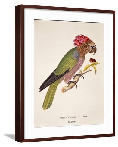 Psittacus Accipitrinus--Framed Art Print