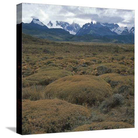 Semi-Desert Steppe with Plants of Mulinum Spinosum, the Group of Fitz Roy in the Background--Stretched Canvas Print