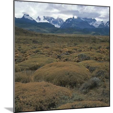 Semi-Desert Steppe with Plants of Mulinum Spinosum, the Group of Fitz Roy in the Background--Mounted Photographic Print