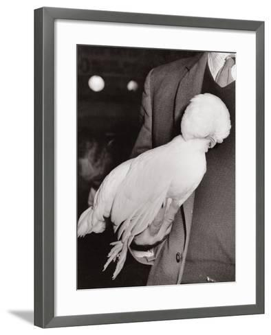 A White Poland Bantam, First Prize Winner at the Dairy Show, Olympia, London, 1963--Framed Art Print