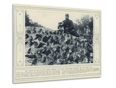 The Plague of Rats in the French Trenches, an Official Rat-Catcher, with His Dog, and their Bag--Metal Print