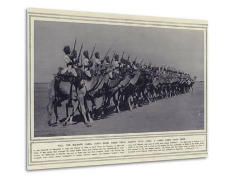 Will the Bikaner Camel Corps Bring their Usual Mounts with Them a Camel Corps from India--Metal Print