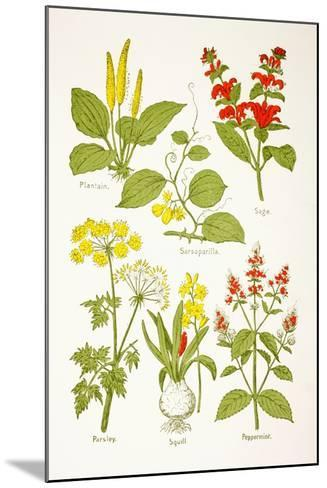 Medicinal Herbs and Plants, from 'Virtue's Household Physician', Published in 1924--Mounted Giclee Print