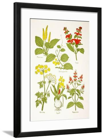 Medicinal Herbs and Plants, from 'Virtue's Household Physician', Published in 1924--Framed Art Print